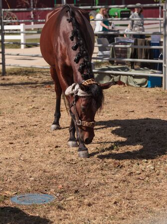 barn barnyard: Brown bay horse on a farm and equestrian property