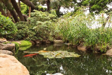 gosanke: Relaxing, zen like pond with a waterfall, koi fish and tropical plants. Stock Photo
