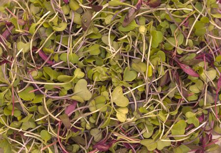broccoli sprouts: Mixed organic greens, including broccoli sprouts, background