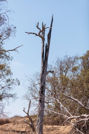 struck: A tree burned in the center after been struck by lightning.