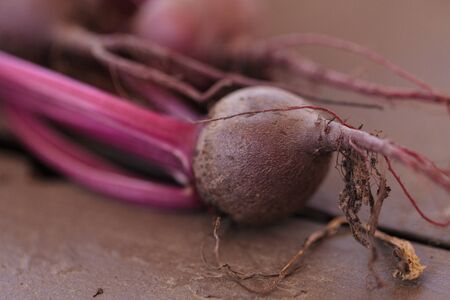 Red beet grown in an organic garden in summer in Southern California.