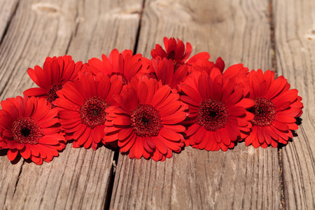 gerbera daisies: Red gerbera daisies clustered on a rustic wood picnic table background