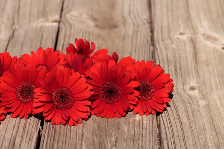 clustered: Red gerbera daisies clustered on a rustic wood picnic table background