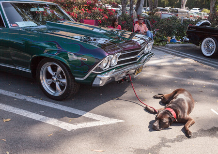 Laguna Beach, CA, USA - October 2, 2016: Green and blue 1969 Chevy Chevelle owned by John Pettinato and displayed at the Rotary Club of Laguna Beach 2016 Classic Car Show. Editorial use. Editorial
