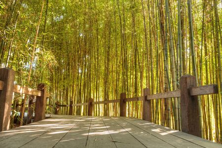 chinese bamboo: Bamboo path with thick Chinese bamboo growing tall and reaching skyward