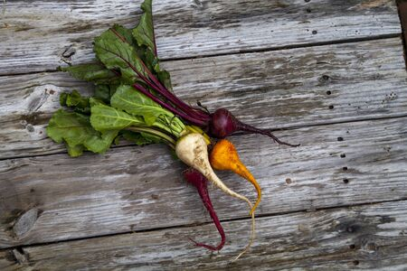 Red, orange and yellow beets vegetable bushel on a rustic wood farm table