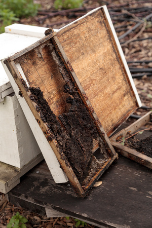 Empty honeycomb from a langstroth beehive with the honey and bees removed. Reklamní fotografie