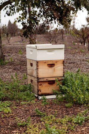 Des piles de ruches d'abeilles langstroth avec des abeilles entrant et sortant pendant leur collecte de pollen pour créer du miel. Banque d'images - 72487450