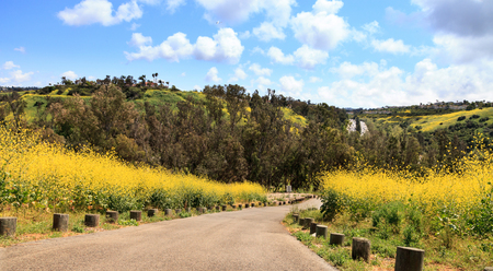 Aliso Viejo Wilderness Park view with yellow wild flowers and green rolling hills from the top hill in Aliso Viejo, California, United States 스톡 콘텐츠