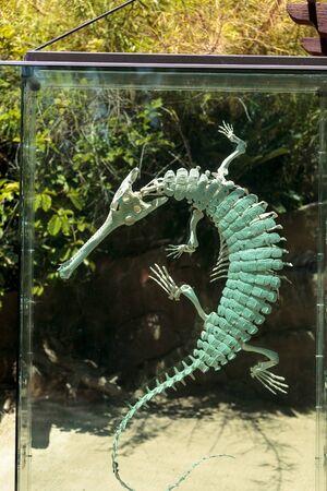Gharial Gavialis gangeticus skeleton displayed in glass.