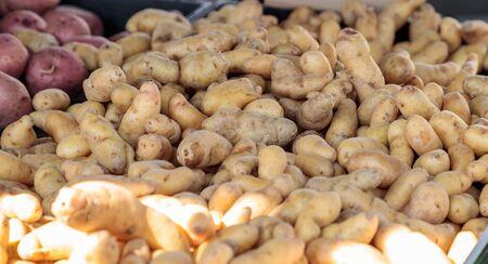 Bushel of golden yellow potatoes sold at a farmers market Stock Photo