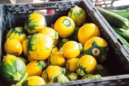 Yellow zucchini also called summer squash sold at a farmers market
