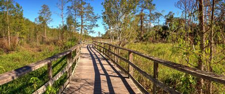 Boardwalk path at  Naples, Florida through pond cypress trees Taxodium distichum var nutans.