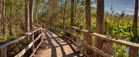 Boardwalk path at Corkscrew Swamp Sanctuary in Naples, Florida through pond cypress trees Taxodium distichum var nutans.
