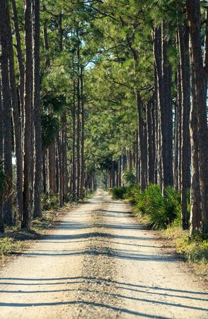 Tree-lined wooded road headed into a marsh at the Fred C. Babcock and Cecil M. Webb Wildlife Management Area in Punta Gorda, Florida