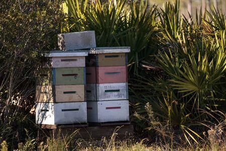 Piles de ruches de nids d & # 39 ; abeilles avec des abeilles qui volent en haut et que le pollen se répand pour le miel se déverse Banque d'images - 92041518