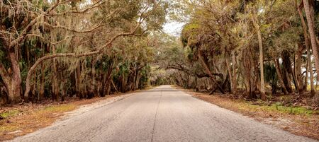 Moss covered trees line a road along the wetland and marsh at the Myakka River State Park in Sarasota, Florida, USA
