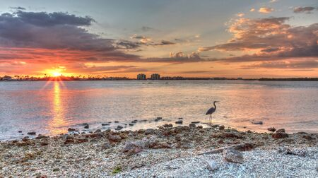 Tall Great blue heron Ardea herodias stands in front of a sunset on Marco Island, Florida. Archivio Fotografico