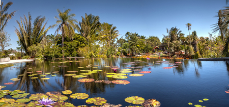 Naples, Florida, USA – March 4, 2018: Reflective pond with water lilies and plants at the Naples Botanical Gardens in Naples, Florida. Editorial use. Banco de Imagens