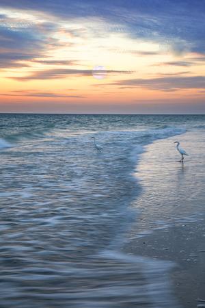 L'airone bianco maggiore guada con grazia attraverso l'acqua sulla spiaggia di Naples all'alba mentre la luna piena tramonta a Naples, Florida Archivio Fotografico