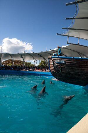 Miami, Florida, USA – October 21, 2014: Pod of Bottlenose dolphin Tursiops truncatus perform at the Miami Seaaquarium in Florida. Editorial use only.