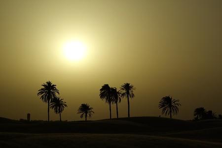 Sand landscape of Sahara desert