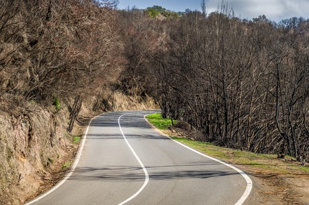 La Gomera island road through fired forest in Canary islands, Spain photo