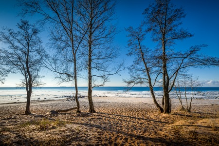 Cold autumn beach landscape with trees and frost in sunny day photo