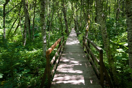 national forests: Wooden bridge through the swamp in green forests of Biogradska mountain national park. Montenegro.