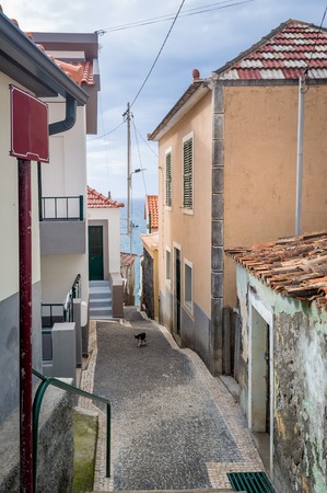 cat island: Vertical photo of Paul do Mar old town narrow street with cat walking, leading towards the Atlantic ocean shore, Madeira island, Portugal.