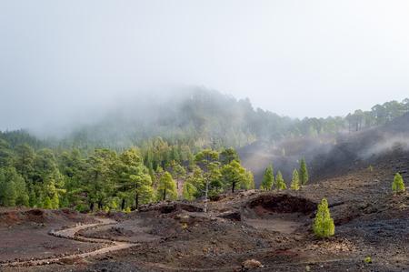 Foggy Chinyero volcano Stock Photo - 114302247