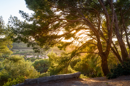 Sunset in the tree branches. Beautiful fields and hills of Porquerolles islnad Stock Photo