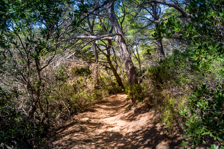 Walking and hiking beautiful paths in the forests of Porquerolles island, Provence Cote d'Azur, France Stock Photo - 114302206