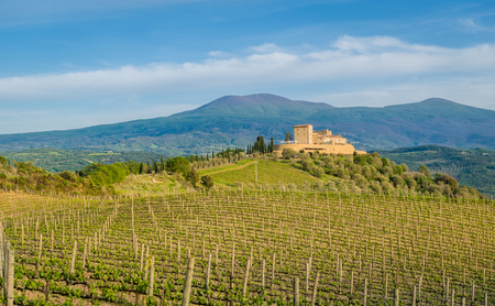 Toscana beautiful vineyard spring view landscape at Val dOrcia, Italy.