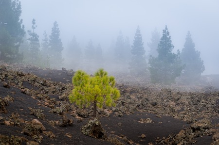 Hiking trails around Chinyero island. Tenerife national park in the mountains. Spain.