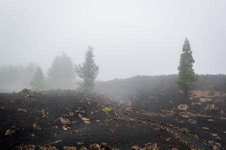 Black desert of Chinyero and round hiking path. Teide national park, Tenerife, Spain.