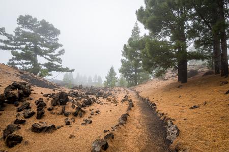 Beautiful hiking path at Chinyero volcano at Teide national park. Tenerife island, Canaries, Spain.