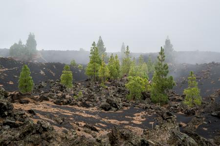 Chinyero volcano hiking trails. Adventure activities at Teide national park, Tenerife island, Spain.