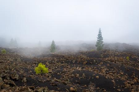 Chinyero volcano trekking path at black sands. Tenerife island, Spain.