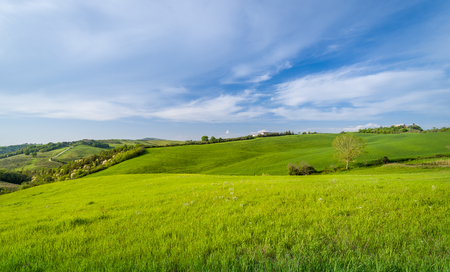Clean green grass fields of Tuscany