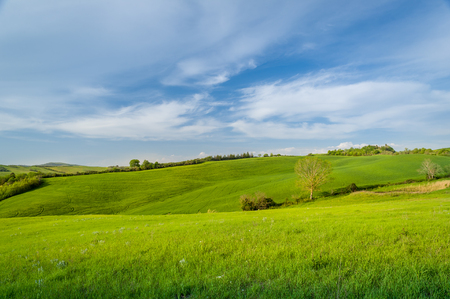 Beautiful panoramic view of Tuscany fields 版權商用圖片 - 121251009