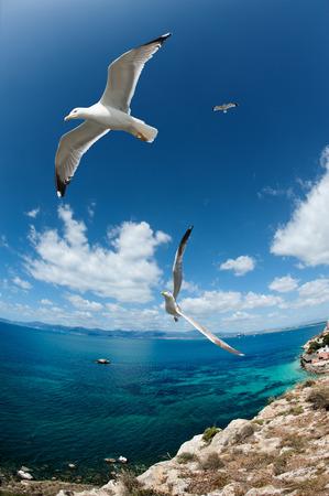 Seagull fliyng near the coast