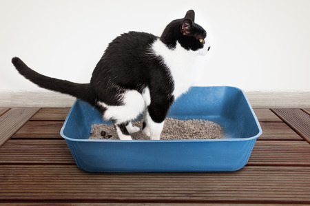poo: Cat poops in the litter