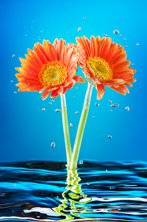 Flowers in the water with bubbles photo