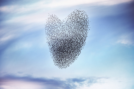 Flock of birds on forming a heart Stock Photo