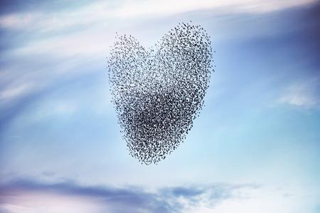 Troep van vogels op de vorming van een hart