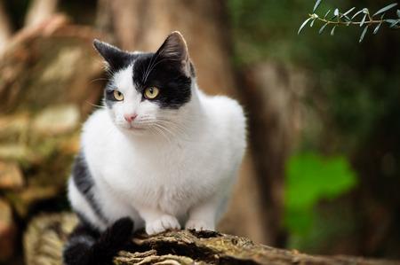 Cat in nature photo
