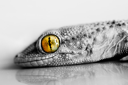orange snake: Smiling Gecko Stock Photo