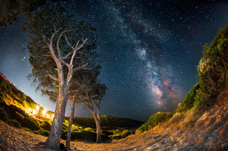 the Milky Way that rises among the trees photo