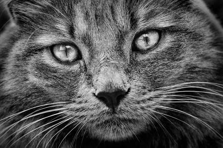 Cat with languid gaze photo